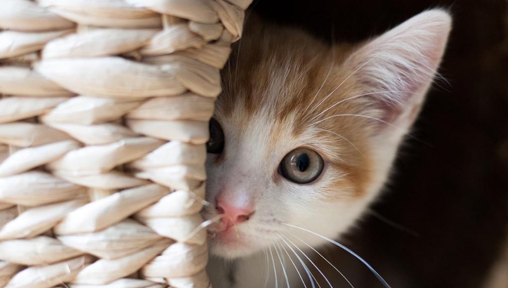 【夢占い】猫が夢に現れた時、あなたの心理は?